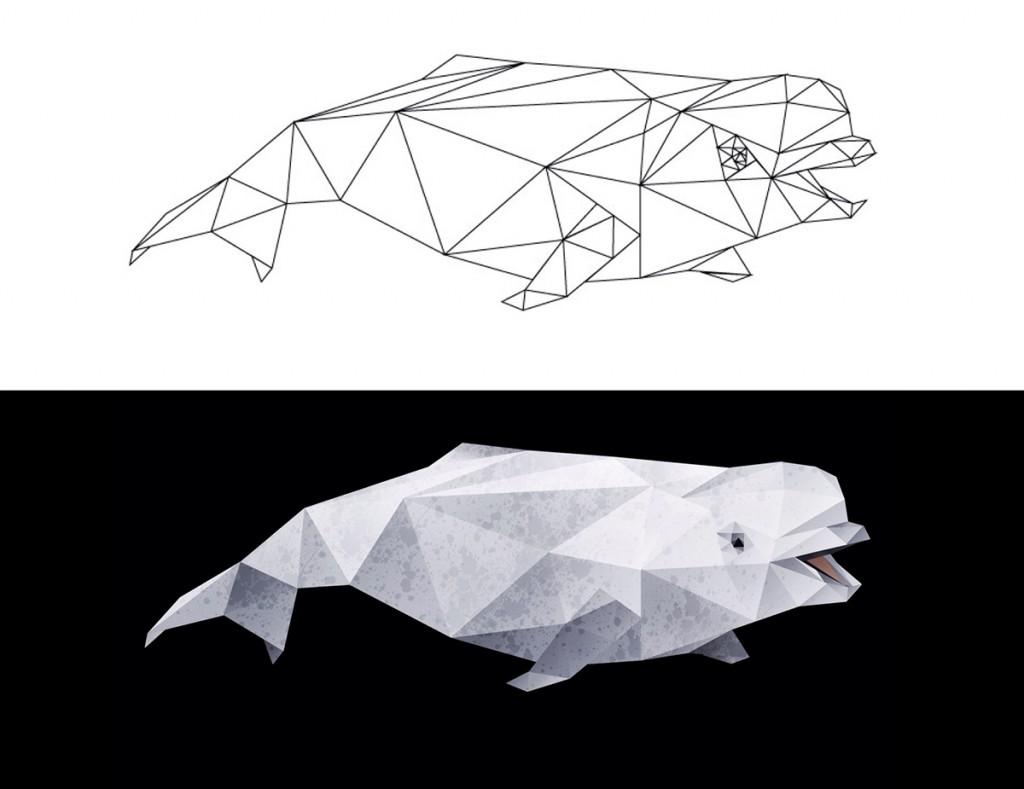 Beluga Whale - Split